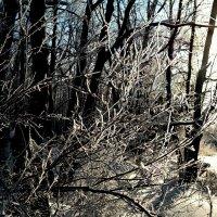 Про солнышко лесное в январе.. :: Андрей Заломленков