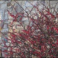 Зимние краски :: galina bronnikova