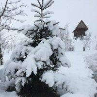 Зимняя сказка :: Игорь Ворони