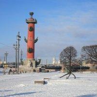 Вид на Ростральные колонны. :: Валентина Жукова