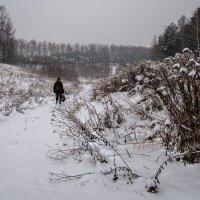 Дорога домой :: Тамара Цилиакус