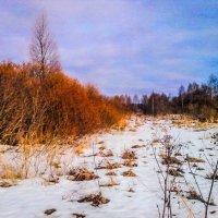 Зимние краски. :: Александр Куканов (Лотошинский)