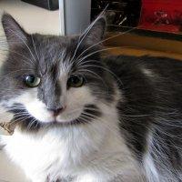 Просто котик :: veera (veerra)