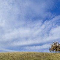 Одинокое дерево :: Гульнара Шафиева