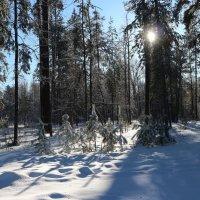 Холодное зимнее солнце :: Юрий Колчин