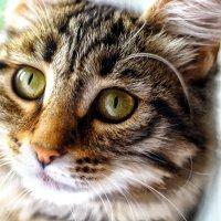 Кошачий взгляд :: Натали