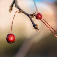 Яблочки для птичек. :: Виктор Иванович