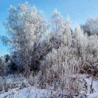 Мороз и солнце! :: Александр Куканов (Лотошинский)