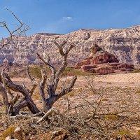 Безмолвие пустыни :: Валерий Цингауз