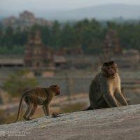Фотозарисовки из путешествия по Индии. :: Юлия