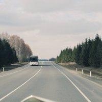 Дорога домой :: Ольга Перфильева