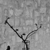 Солнечное граффити... :: Alex S.