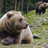 Репортаж с медвежьей тропы :: Alexandеr P
