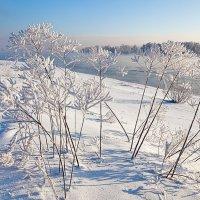 Белые цветы зимы :: Анатолий Иргл