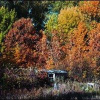 Время, затерявшееся в осеннем лесу. :: Юрий ГУКОВЪ