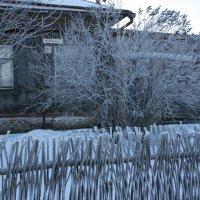 мороз крепчает :: Дмитрий Солоненко