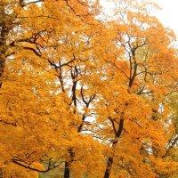 Золотая осень. :: Виктор Егорович