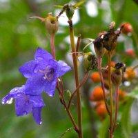 Цветы и семена :: Александр