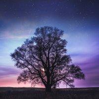 дерево :: Кира Пустовалова - Степанова