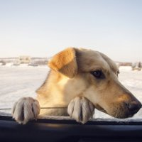 |Собакен :: Виктория Большагина