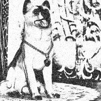 Собака :: Юлия Денискина