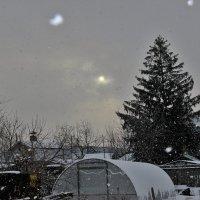 Зимнее утро. :: Венера Чуйкова