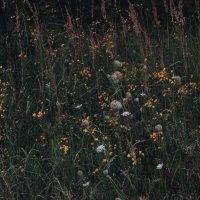 Осенние травы :: Ольга Перфильева