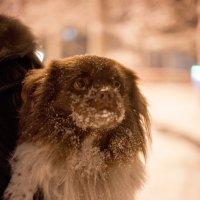Замерзший пес) :: Юлия Рамелис