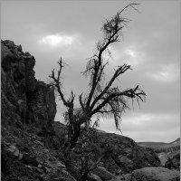 Мертвое дерево в горах. :: Lmark