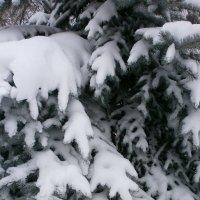 Зимой ... :: Алёна Савина