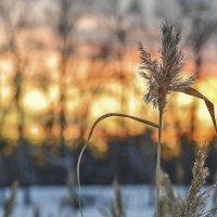 Зимний вечер :: юрий Амосов