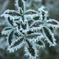 Сюрприз Зимы :: Swetlana V