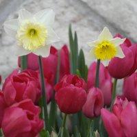 Фестиваль цветов :: saslanbek isaev