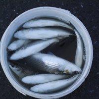 Удачная рыбалка :: saslanbek isaev