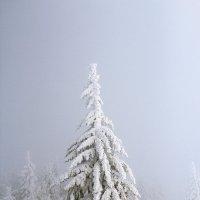 В лесу родилась елочка... :: Liliya