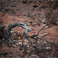 Растение пустыни. :: Lmark