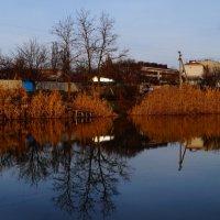 Декабрьский пруд на Кубани :: Дина Дробина