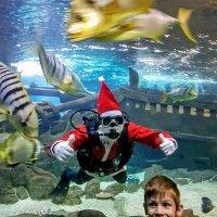 Океанариум Sochi Discovery World. Новогодние каникулы! :: Tata Wolf