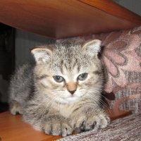 Котёночкин :: OLLES