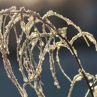 Зимний сон :: Swetlana V