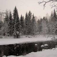 Зимний лес :: Оксана Н