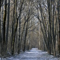 лес :: Геннадий Свистов