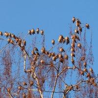 зимние птички 5 :: Александр Прокудин