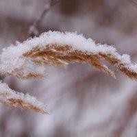 В белой шубке снеговой :: Татьяна Ломтева