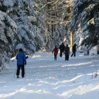На прогулке в зимнем лесу :: Mariya laimite
