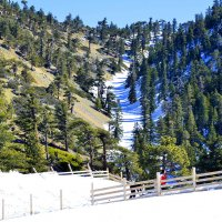 В горах Калифорнии :: Николай Танаев