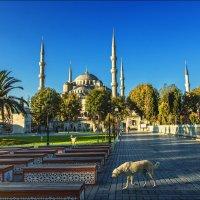 Когда просыпается большой город. Площадь Султанахмет в Стамбуле :: Ирина Лепнёва