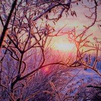 Январское утро :: mAri