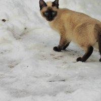По снежку... :: mAri