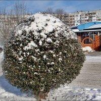 Дождались! Вчера выпал снег!!! :: Нина Корешкова
